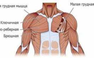 Анатомия мышц, поднимающих ребра человека