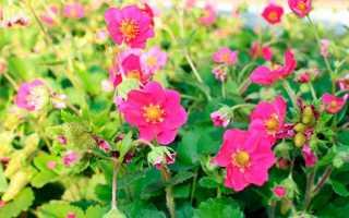 Декоративная земляника с необычными цветами: выбор для ценителей оригинальных растений