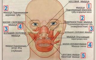 Кисетные морщины? как не превратить губы в завязанный мешочек