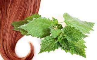 Отвар крапивы для ополаскивания волос