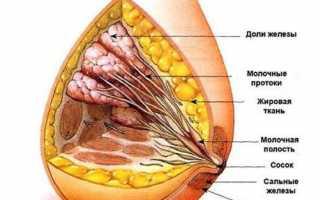 Красивая и здоровая женская грудь